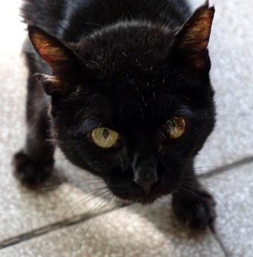 sedia_cat_2